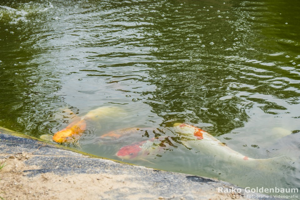 Seehotel Zeuthen Hochzeit Teich